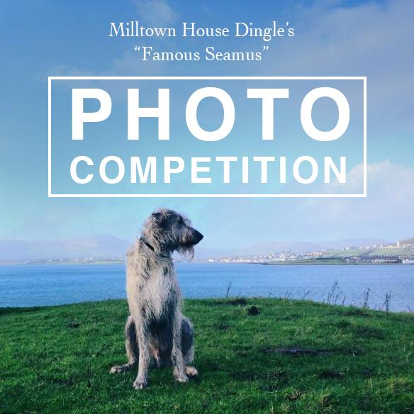 Free stay in Dingle photo competition Milltown House