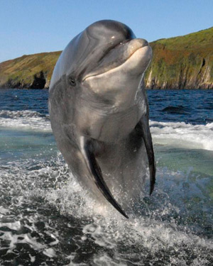 fungie-the-dolphin-milltown-house-dingle
