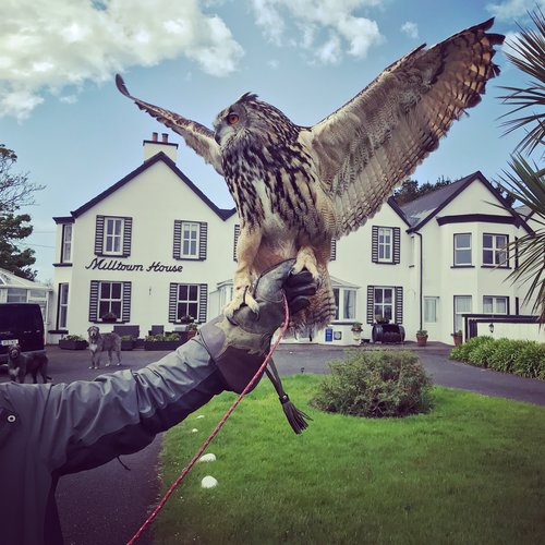 falconry-at-milltown-house-dingle-ireland